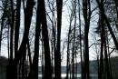 Rezerwat Łubówko - kwiecień 2009