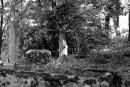 Pałac Mierzęcin - stary cmentarz