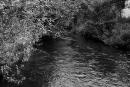 Rzeka Miała, po wyjściu z młyna