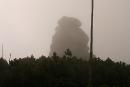 Słonecznik we mgle