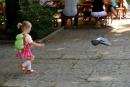 W pogoni za gołębiem