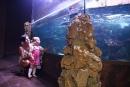 Rekin rafowy czarnopłetwy