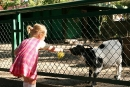 Kozy lubą liście