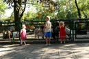 Dzieci lubią karmić kozy - swoista biocenoza :)