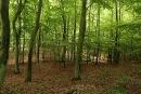 Malowniczy las wdrodze dozagrody