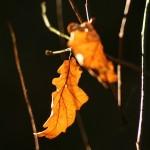 Jesienne Słońce i jesienne liście wzajemnie się uzupełniają