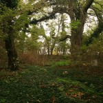 Cmentarz ewangelicki wChrzypsku Wielkim