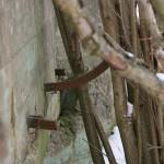 Jeszcze niewycięty wspornik naktórymrozpięty był drut kolczasty